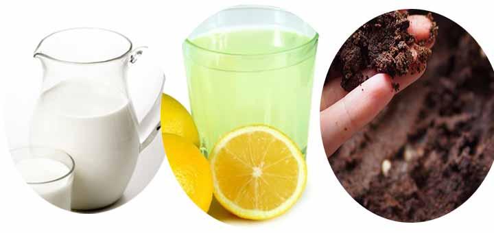 Limonlu Kahve Maskesi (Yağlı ciltler için)