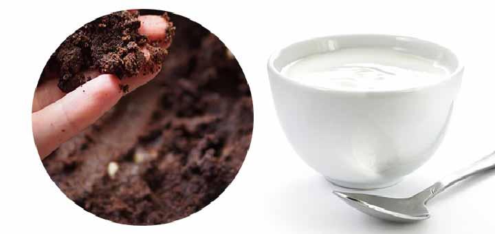 Yoğurtlu Kahve Maskesi (Kuru ciltler için)